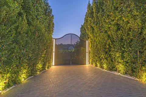Nature, Tree, Green, Light, Sky, Architecture, Botany, Leaf, Walkway, Bridge,
