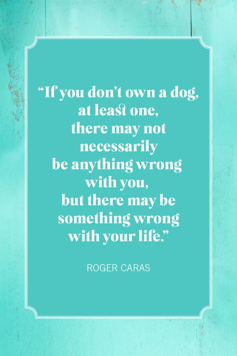dog quotes roger caras