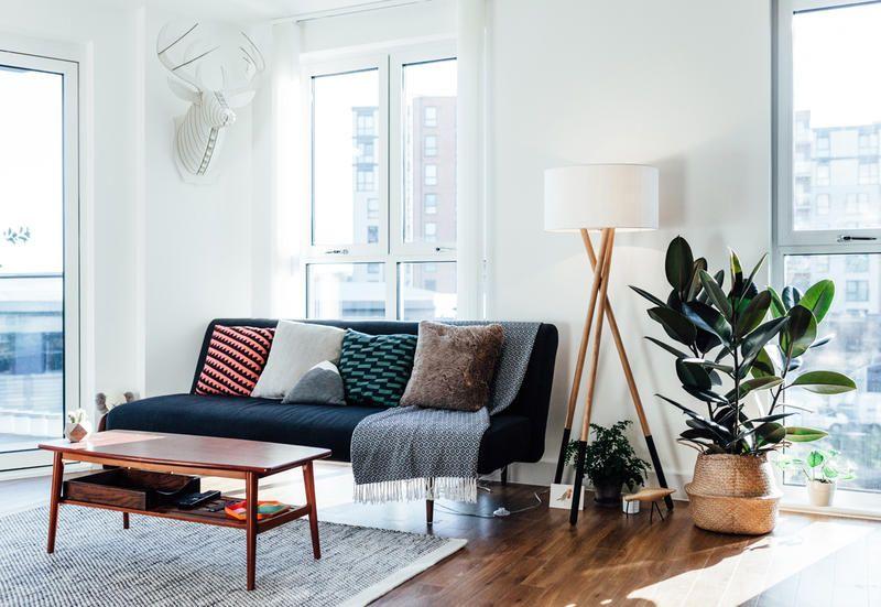 5 piante da appartamento sofisticate perfette per chi non ha il pollice verde