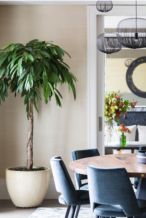The 18 Best Indoor Trees For Every Kind Of Plant Parent