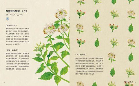 林務局絕美周邊又一波!種籽設計操刀《鄒的植物書》描繪與自然共生美學
