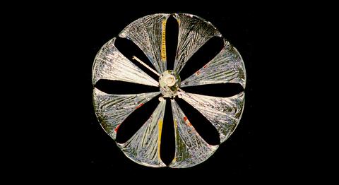 Circle, Symmetry, Plant, Macro photography,