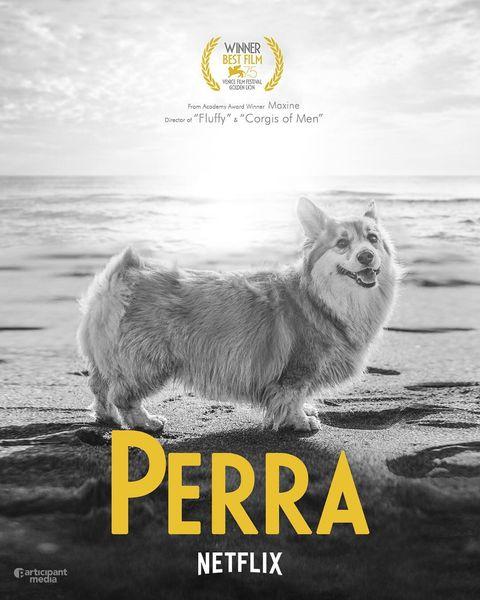 Text, Poster, Pembroke welsh corgi, Font, Adaptation, Photo caption, Canidae, Photography, Dog breed,