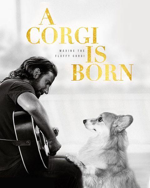 Canidae, Dog, Companion dog, Carnivore, Dog breed, Album cover, Akita, Movie, Book cover, Illustration,