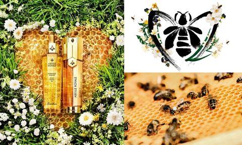 嬌蘭 520世界蜜蜂日