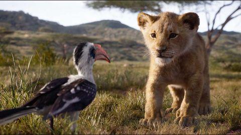 Vertebrate, Wildlife, Bird, Terrestrial animal, Beak, Adaptation, Vulture, Bird of prey, Grassland, Grass,