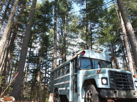 Motor vehicle, Vehicle, Transport, Tree, Mode of transport, Natural environment, Car, Truck, Forest, Woody plant,