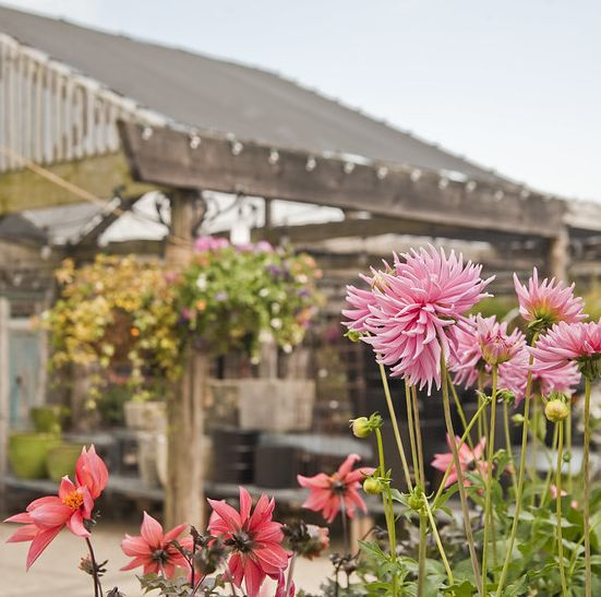 10 Best Garden Design Shops Beautiful Gardening Stores