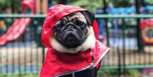 hond-regenjas-hema