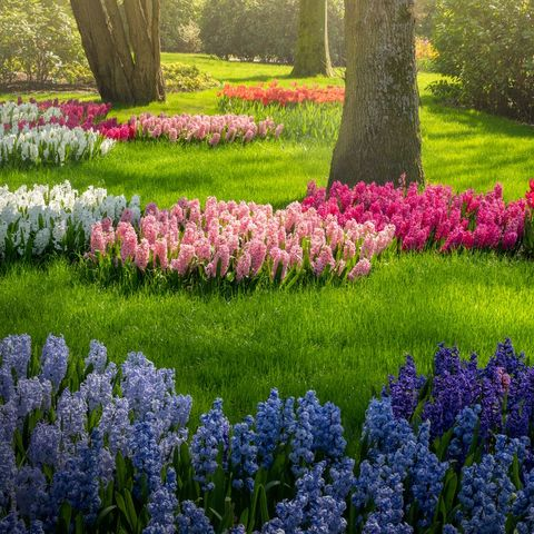 beautifully colored flowers in netherlands park