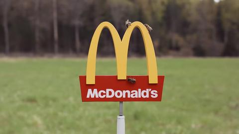世界上「最小間」的麥當勞在瑞典!超迷你招牌、桌椅⋯⋯ 招待的卻不是人類?!