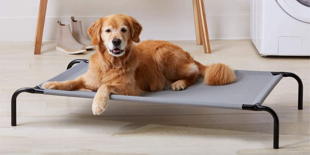 Cooling Dog Beds Exist to Keep Your Pup Comfortable All Summer