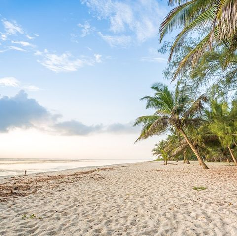 Sky, Beach, Nature, Tree, Shore, Tropics, Sea, Ocean, Sand, Natural landscape,