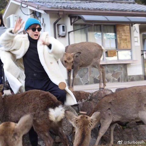 Fur, Deer, Wildlife, Herd, Photography, Fawn,