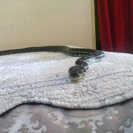 snake on bed