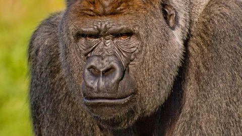 heftigen-ongelukken-dierentuin
