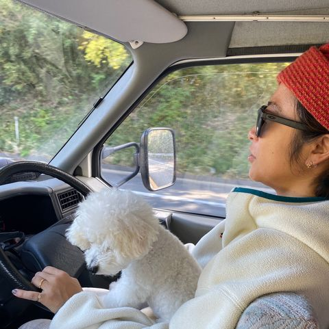 Dog, Driving, Canidae, Vehicle, Car seat, Car, Companion dog, Poodle, Family car, Pomeranian,