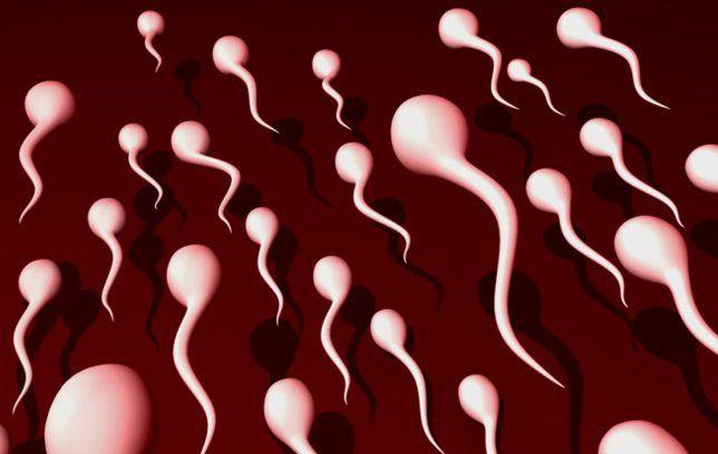 Sperm 7