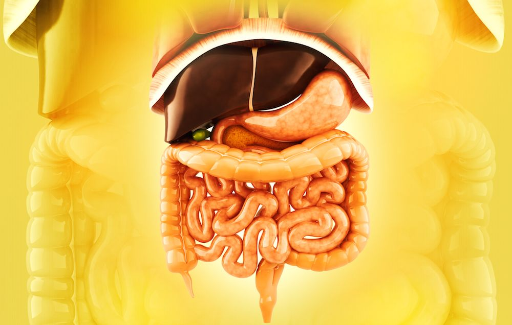 7 Surprising Facts About Your Spleen Mens Health