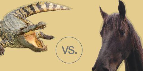 horse vs croc
