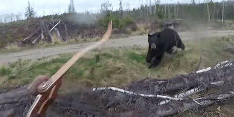 bear attack video