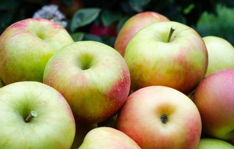 fall food apples