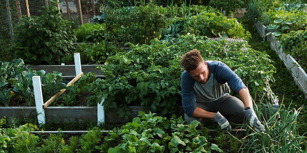 How To Build A Vegetable Garden Men S Health