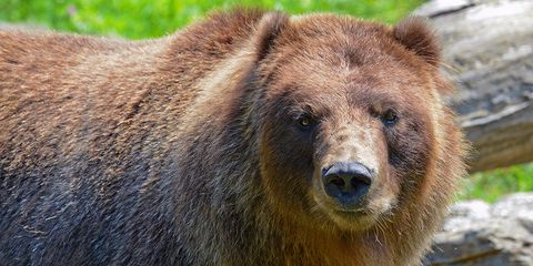 colorado camper wakes to bear chewing on head