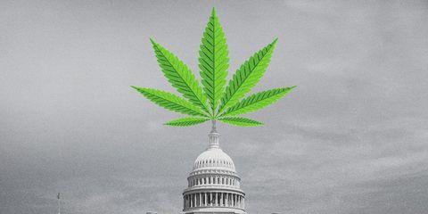 congress marijuana