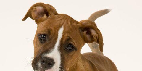 dog expression
