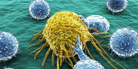 foods might stop cancer from spreading
