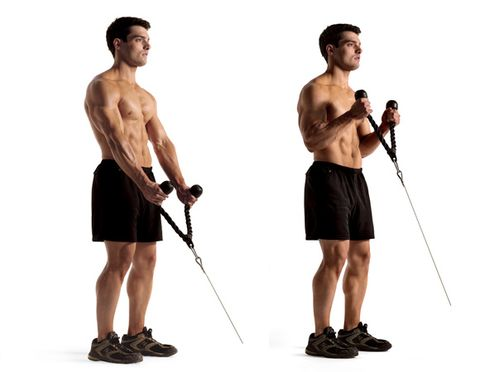 CABLE ROPE HAMMER CURL-Biceps Workout
