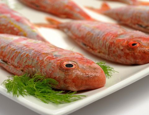 mullet-fish.jpg