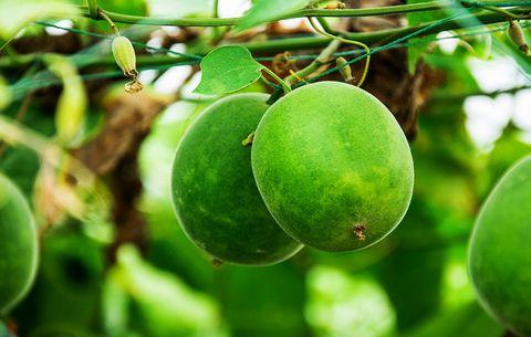 Monk Fruit Sweetener: Is It Any Better Than Sugar? | Men's Health