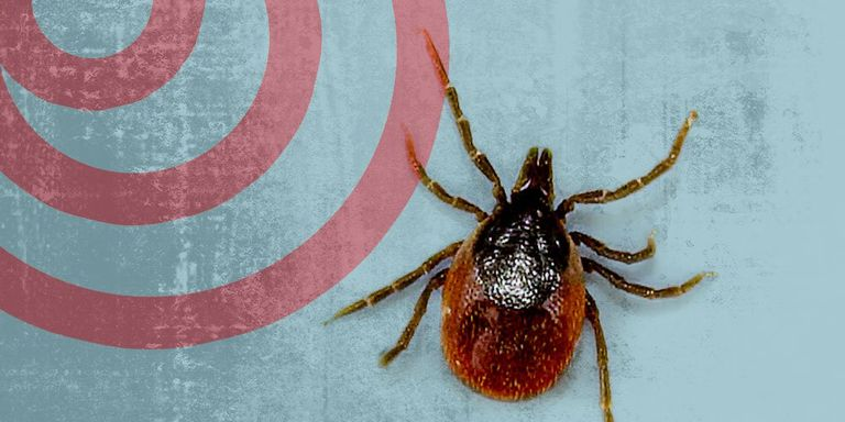 Image result for lyme disease