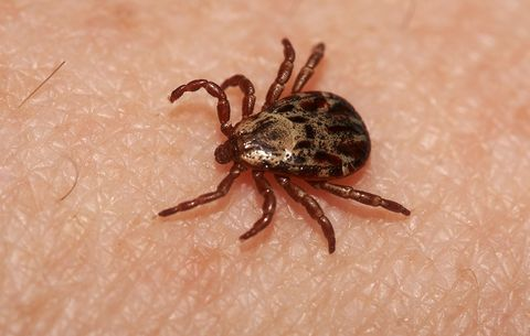 Lyme Disease Isn't the Only Tick-Borne Illness You Need to Worry About This Spring