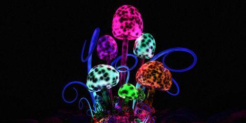 magic mushrooms to reboot your brain