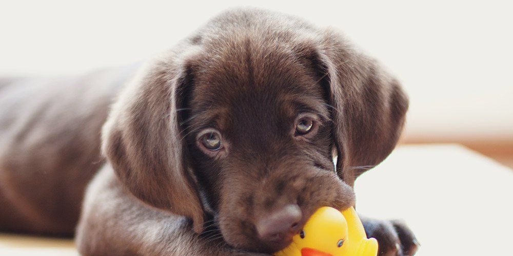 4 Things You Need to Know Before Getting a Dog