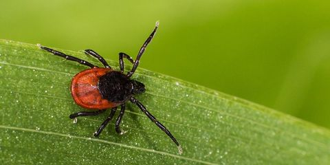 man dies from tickborne virus