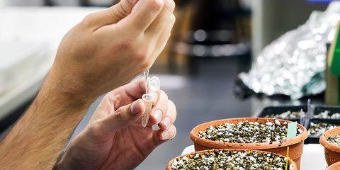 man poisons self with alternative medicine