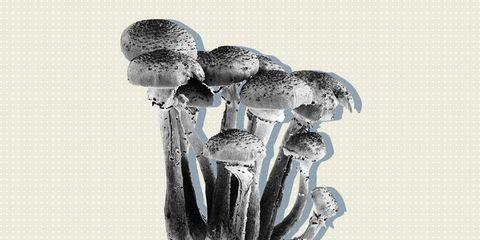 mushroom recreational drug