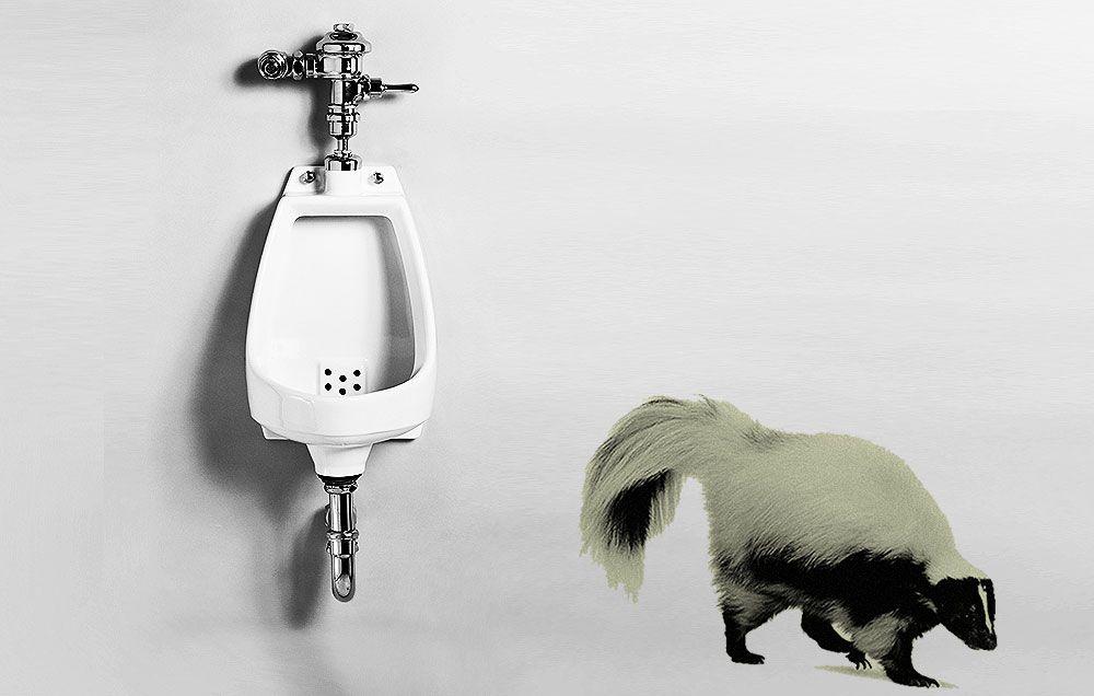 Yeasty smelling urine