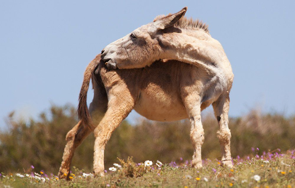 Woman penetrated by donkey