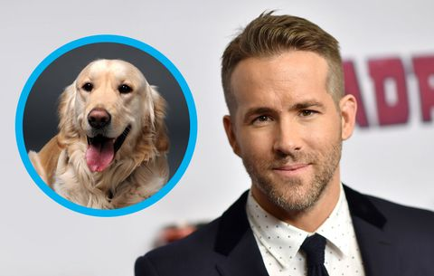 ryan reynolds' dog