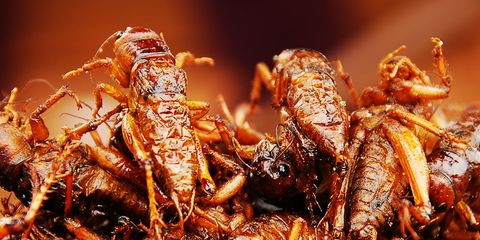 seattle mariners serving fried grasshoppers