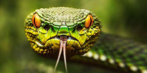 snake venom make heart drugs safer