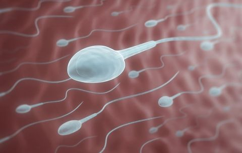 sperm lifespan