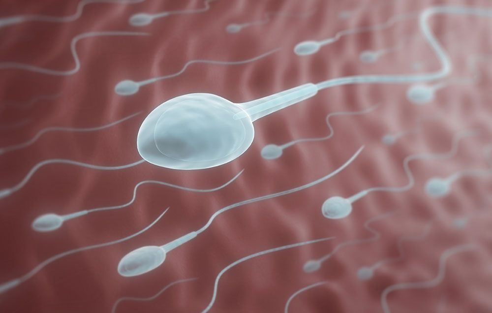 Living conditions of sperm in water