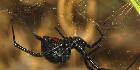 spider venom save brain