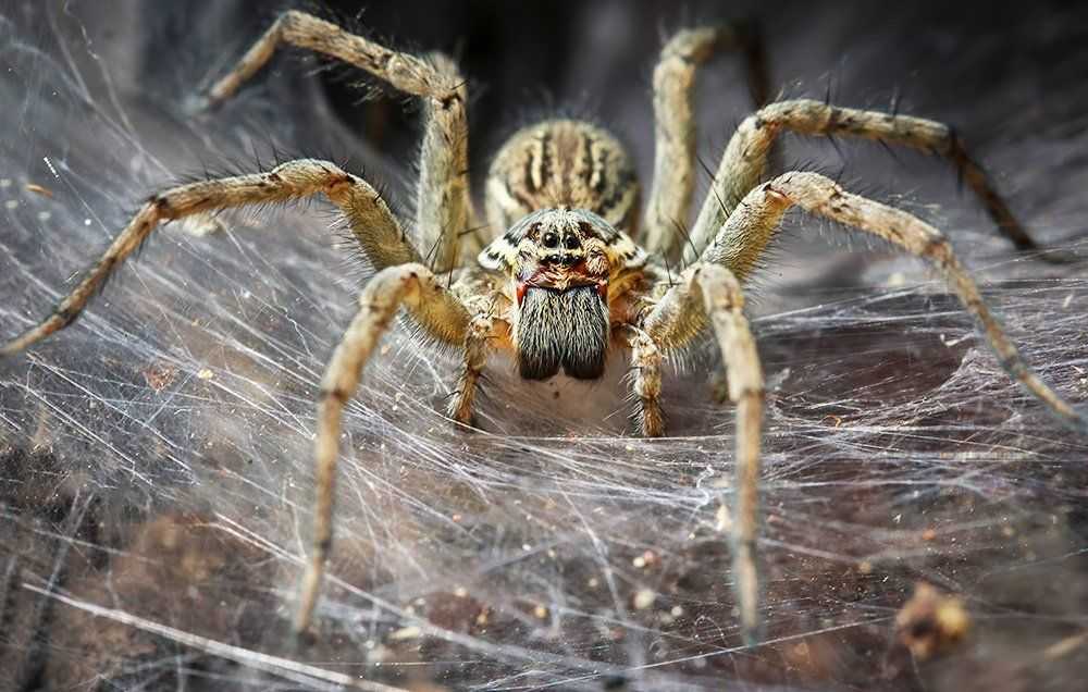 Spiders Eat More Flesh Than Humans, Up to 800 Million Tons Per Year    Men's Health